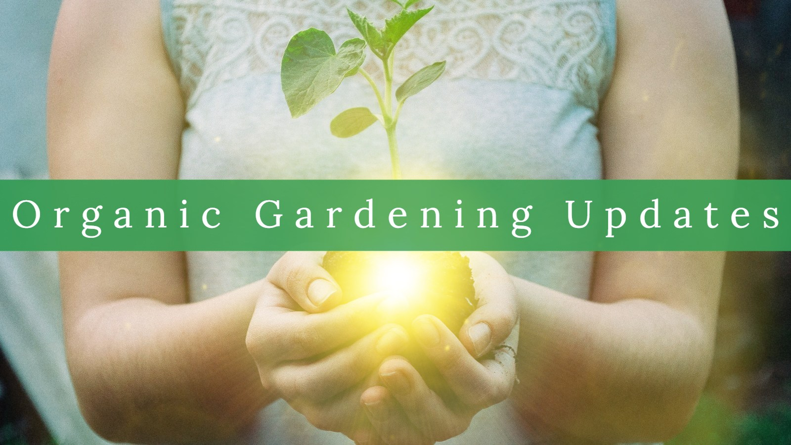 Organic Gardening Updates with light
