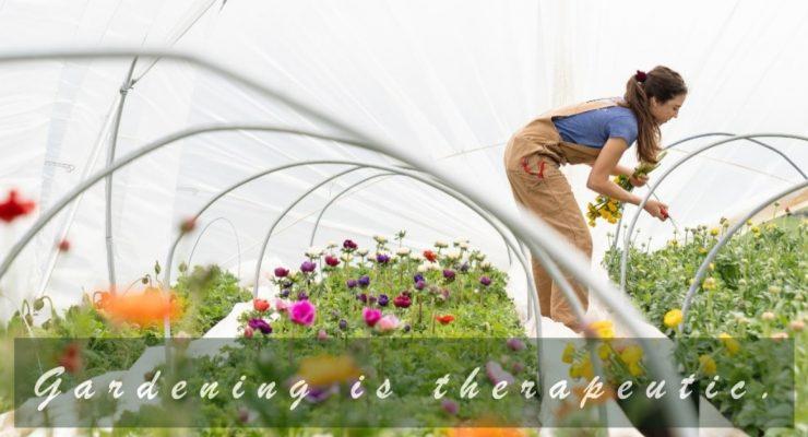 container-gardeninggardening-therapeutic-1