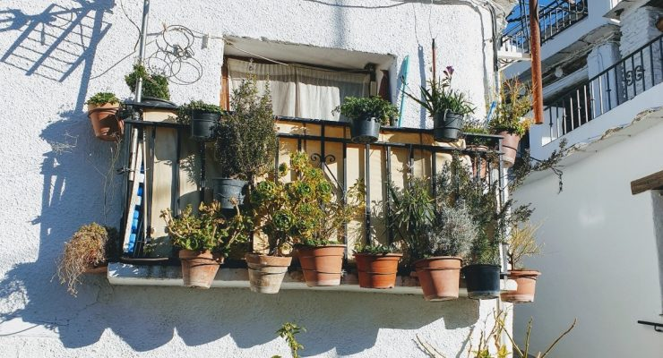 container gardening ideas for vegetables