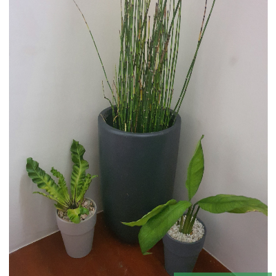 indoor container garden horsetail