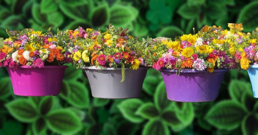 colorful container pots