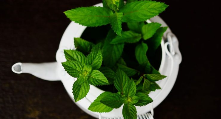 mint in a container garden pot
