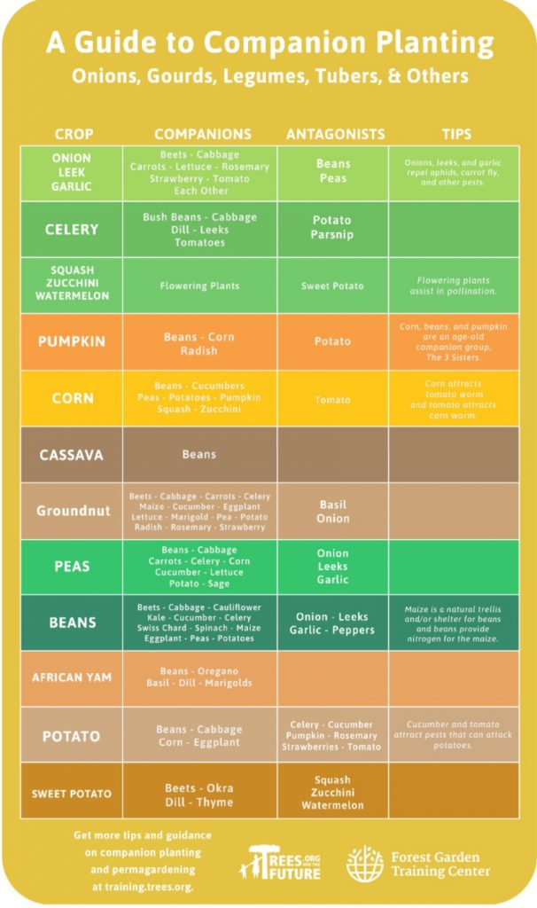 Companion gardening chart 2 - container gardening ideas for vegetables