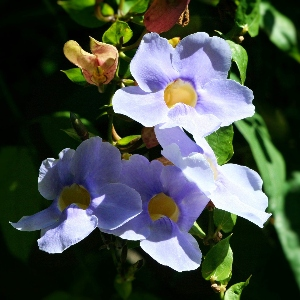 BeFunky-blue sky vine-iGarden101