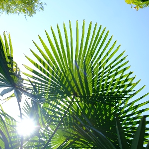 BeFunky-palms-iGarden101