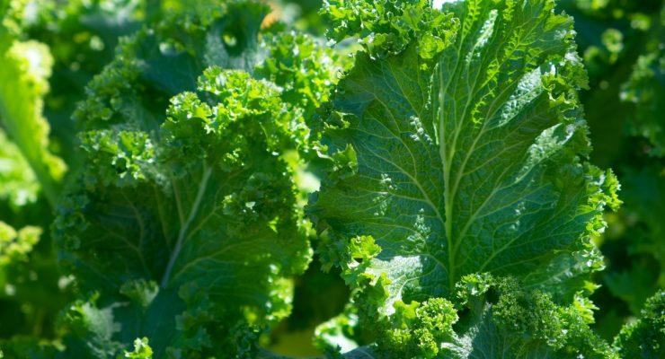 green leafy vegetables - fall harvest