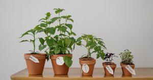 permaculture - indoor